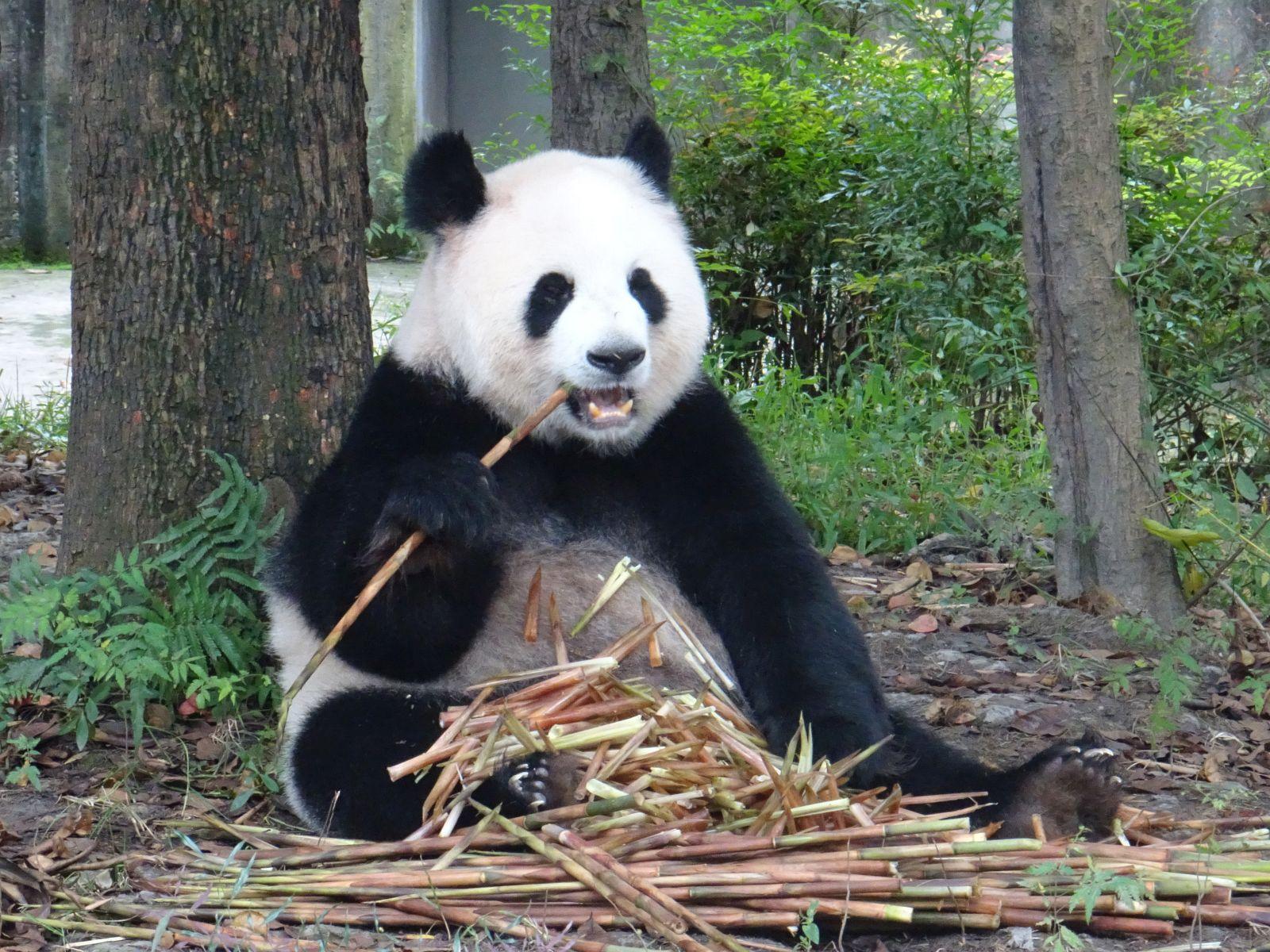 08.10.2016 – 11.10.2016 von Xian nach Chengdu